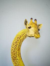 banana giraffe