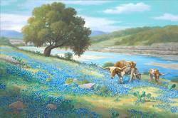 Longhorns Near Llano