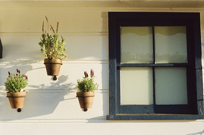 Flower pots and a window frame