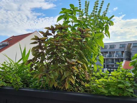 Five Tips For An Edible Apartment Garden