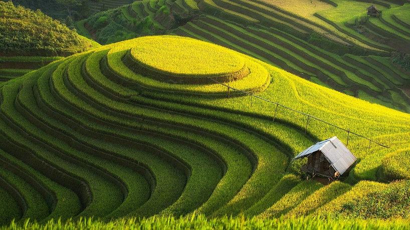 rice-fields-nature-wallpaper-1280x720.jp