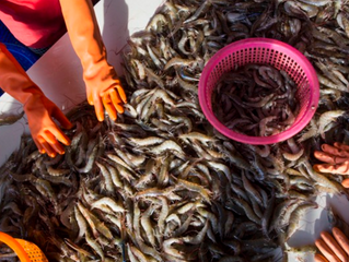 Seeing slavery in seafood supply chains