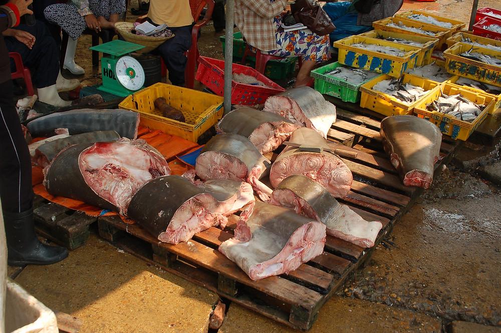 Tuna sold in a market in Hoi An, Vietnam