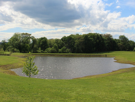 Top 3 Reasons to Maintain Your Pond