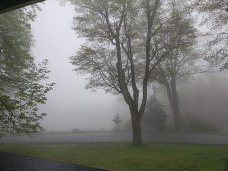 Foggy Mornings at Juniper Grove