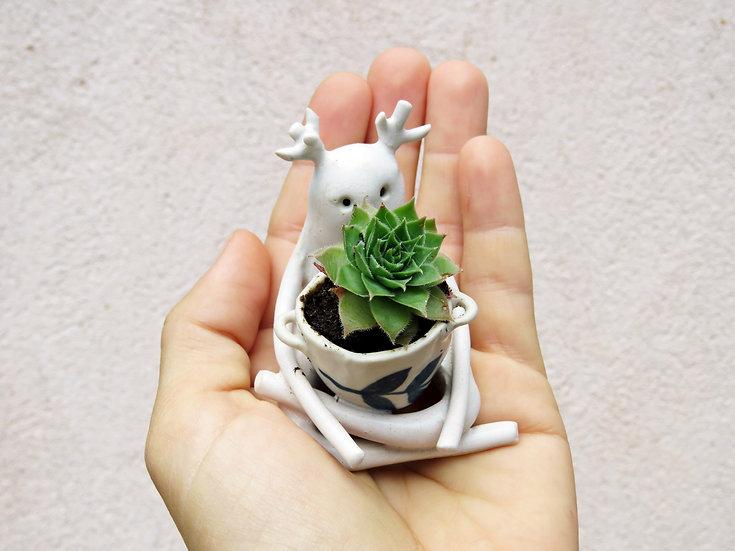 Vagabond amoureux des plantes