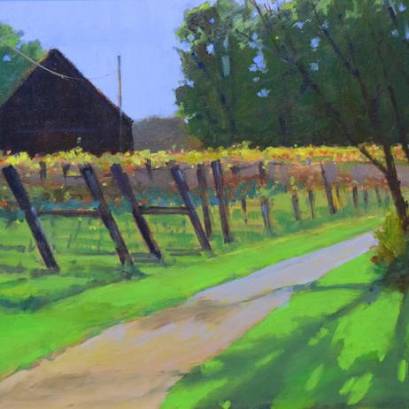 Dan McGrath - Fall at the Vineyard