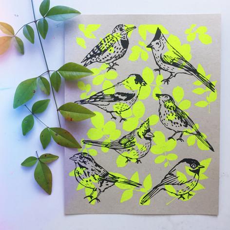 Ashley Worley - KY Birds