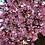 Thumbnail: Exotic shampoo, Cherry blossom, Vanilla, Mango & pink french clay N°19
