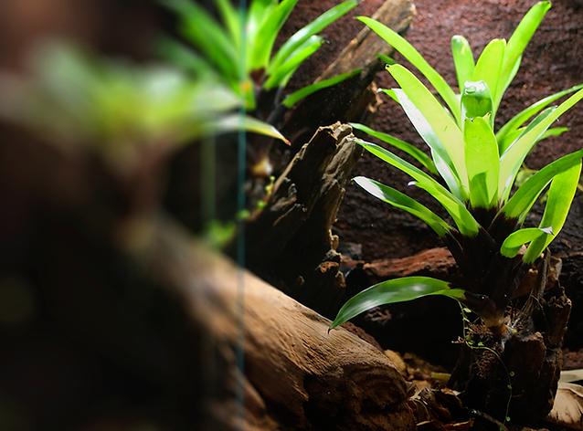 bromeliad frog room terrarium darkerv2.png