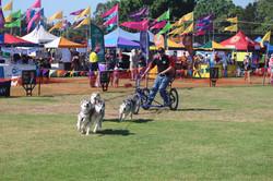 4 Dog Demonstration