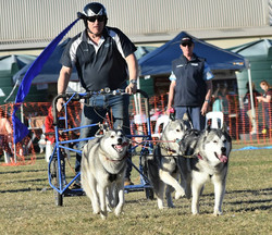 Dogs in the Park 2019