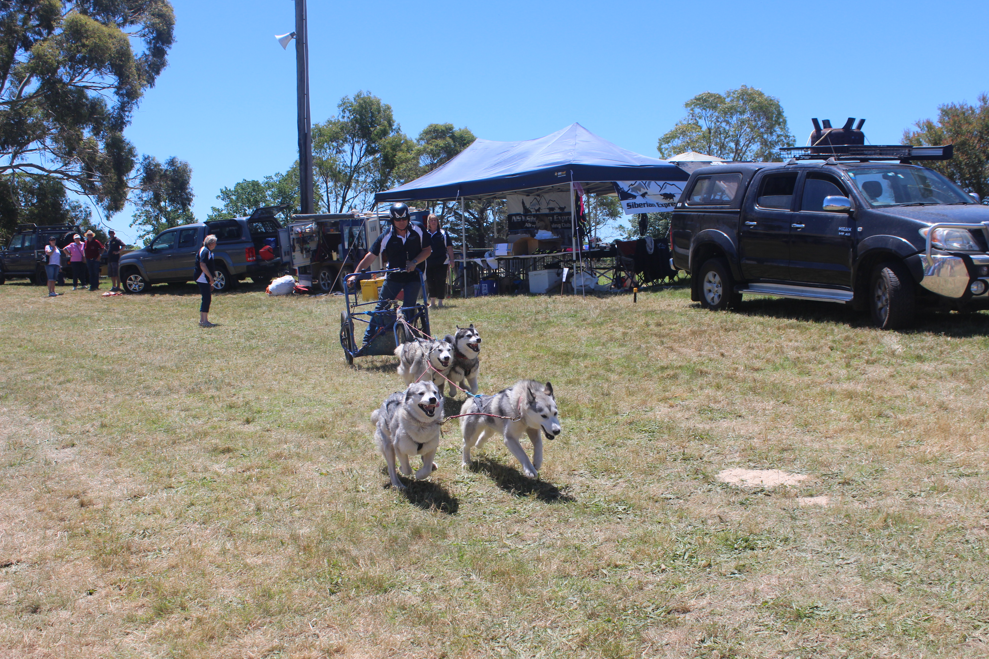 4 Dog Demonstration