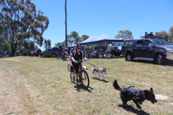 One Dog  Demonstration