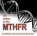 The defect in the MTHFR.jpg