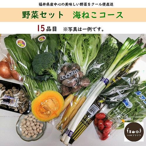 野菜セット 海ねこコース 15品目 旬 おまかせ 新鮮 直送 クール便 本州・四国は送料無料 商品説明書同封