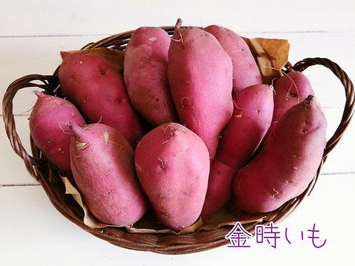 金時いも 約3kg さつまいも 福井県産 生産者指定 八百屋テクテクセレクション