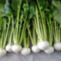水菜.jpg
