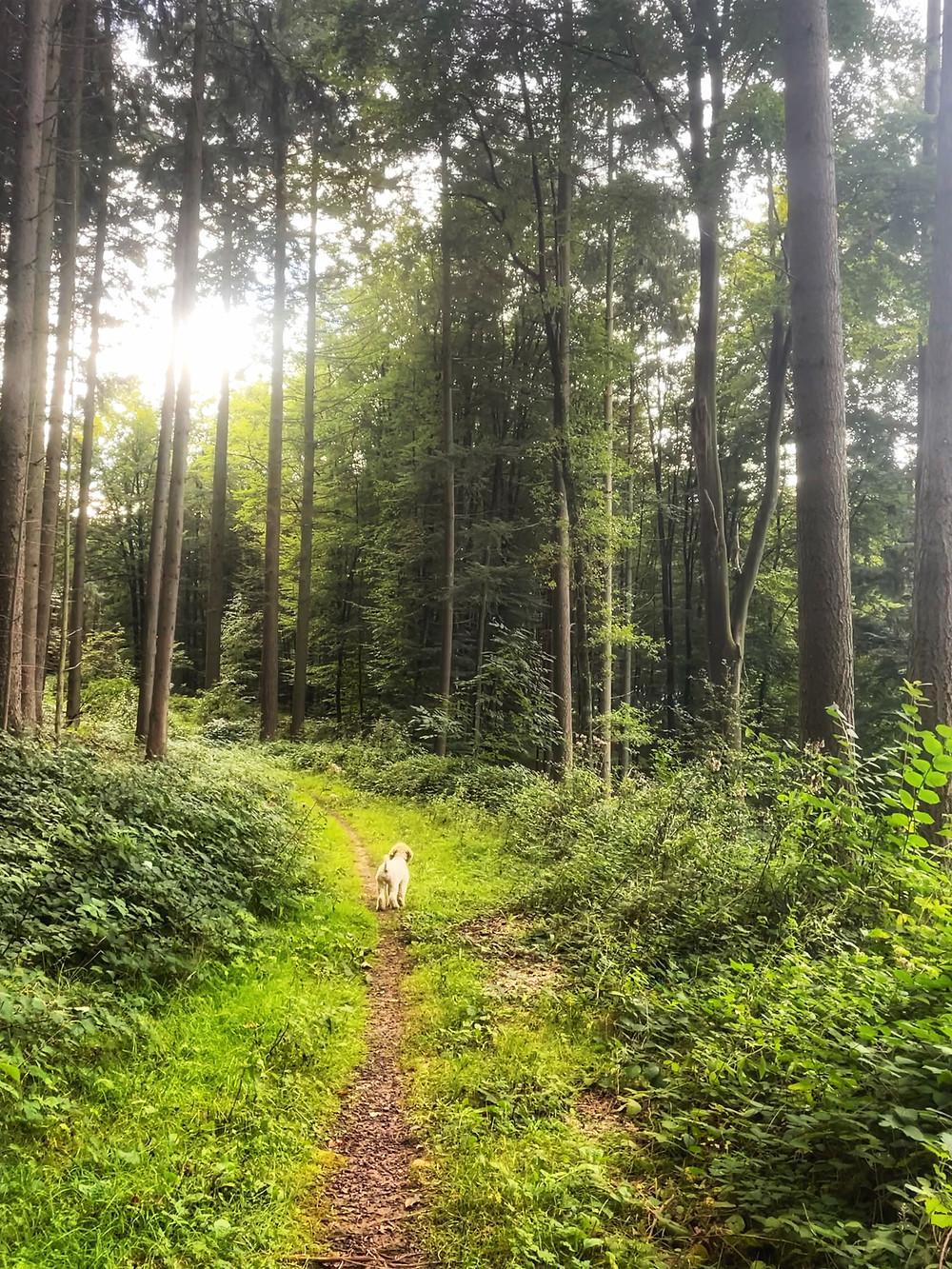 German Camino de Santiago Hiking