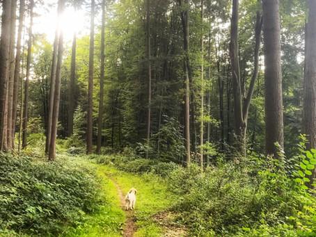 German Camino de Santiago Blog: Landstuhl Secret Mushroom Loop