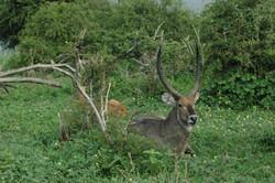 Zambezi Region Safaris
