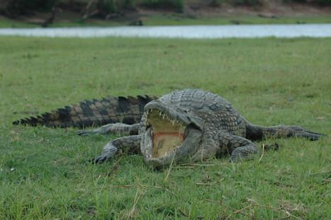 Zambezi Region Wildlife
