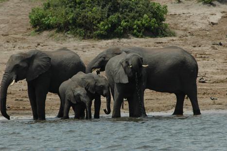 Zambezi Region Safari