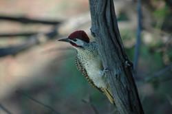 Zambezi Region Birding