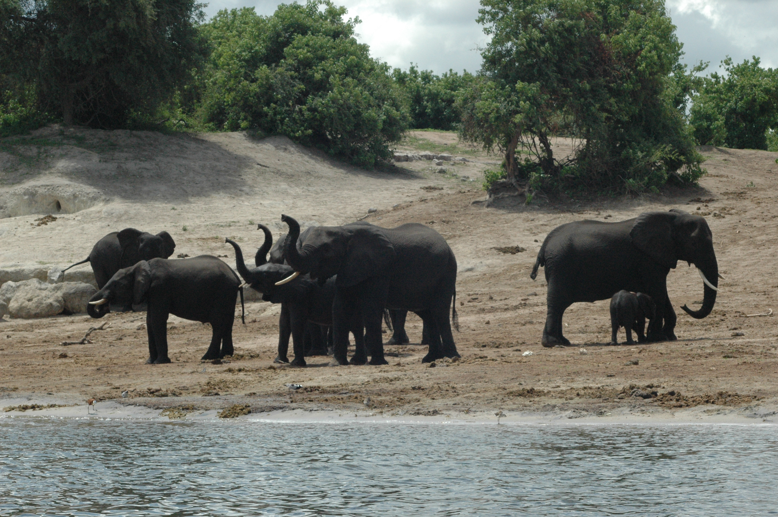 Zambezi Region Safaris