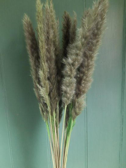Mini Green Pampas Grass Bunch