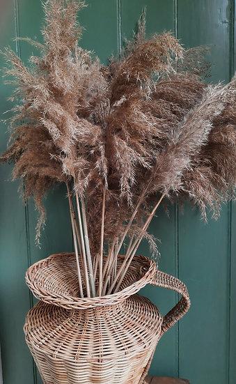 Pampas Reed - Natural Brown