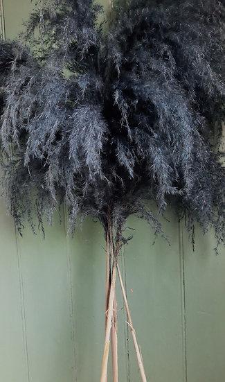 Pampas Reed - Smokey Blue