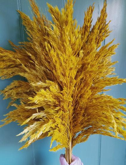 Pampas Reed - Mustard