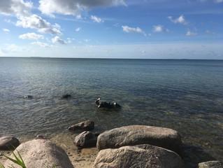 Unser Rudi beim morgendlichen Baden am Südstrand