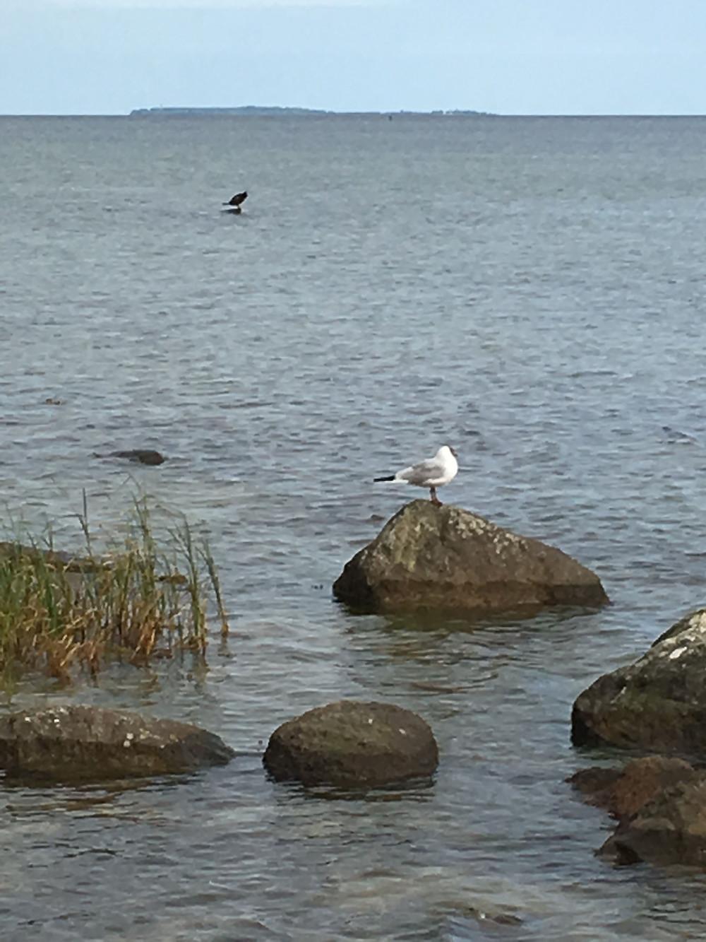 Ein traumhafter Tag am Meer auf der Insel Rügen im Ostseebad Göhren!