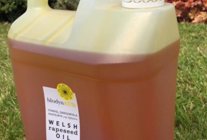 Blodyn Aur rapeseed oil