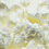 Thumbnail: Cream Of Tartare