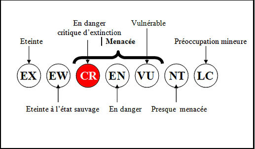 AAA STC en danger critique d'extinction