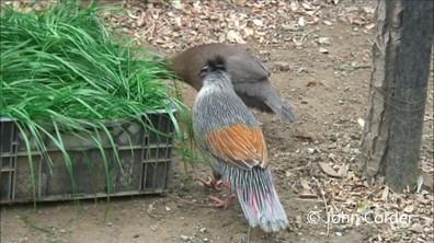 ithagine-au-zoo-de-beijing-4-john-corder