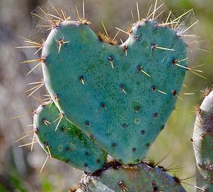 cactus-heart.jpg