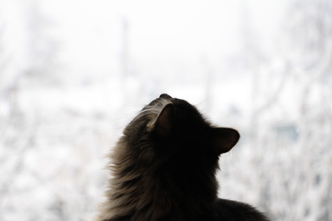 Ellie watching the snow