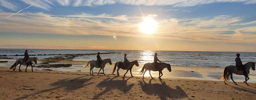 chevaux-sables-vignier.jpg