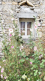 chaucre-rose-tremiere.jpg