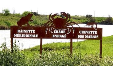 relais-salines-crabe.jpg