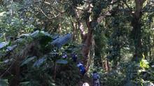 就是愛爬之親子登山 – 天母下竹林步道、天母古道