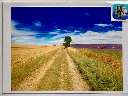 Hitchin - Fields of Wheat & Lavender