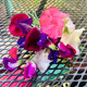 Last sweet peas in the garden for this
