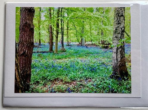 Woolmer Green - Blue Bells in Mardley Woods