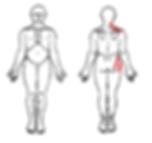 Body chart