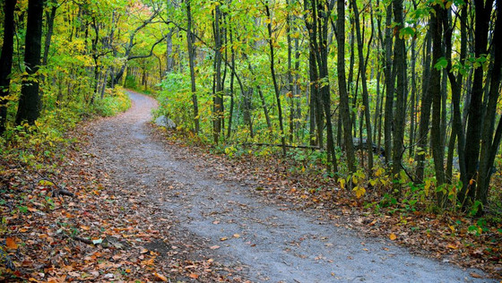 Team-Building: Use NYC Parks for Great Walking-Running Events